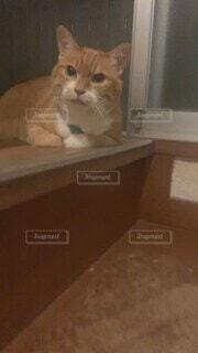 猫,階段,かわいい,癒し,愛猫,甘えんぼ,待ち伏せ