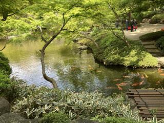 自然,屋外,湖,川,水面,草,樹木