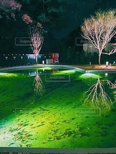 夜景,屋外,湖,緑,花火,草,ライトアップ,明るい,自動販売機
