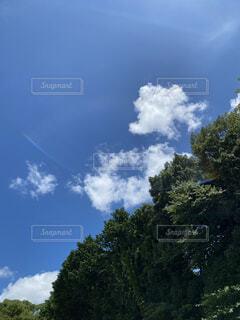 自然,空,雲,青空,青い空,樹木,夏空