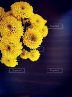 花のクローズアップの写真・画像素材[4673708]