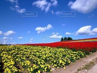 美瑛の花畑の写真・画像素材[4673707]