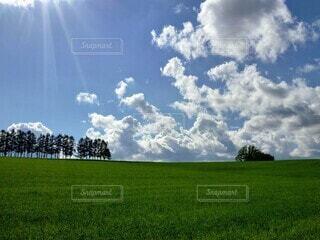自然,風景,空,屋外,太陽,雲,景色,草,樹木,草木,日中