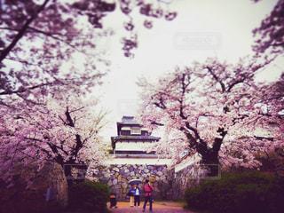 春の写真・画像素材[402902]