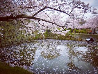 春の写真・画像素材[419045]