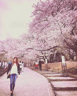 春 - No.420866
