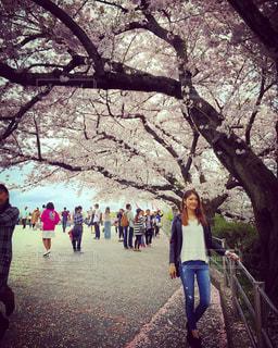 春の写真・画像素材[420876]