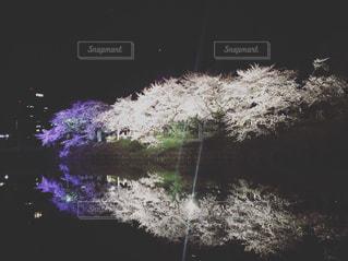 春の写真・画像素材[420893]