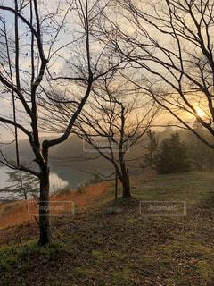 自然,風景,空,秋,屋外,湖,水面,霧,草,樹木
