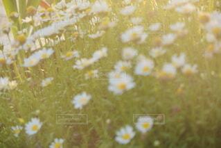 自然,花,景色,夕陽,草木
