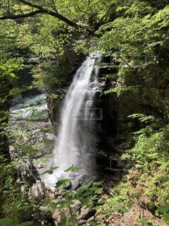 自然,森林,屋外,川,水面,滝,樹木,草木