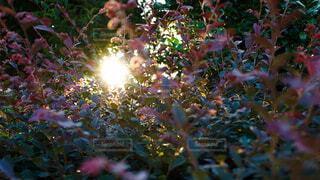 自然,光,樹木,夕陽,陰影,草木