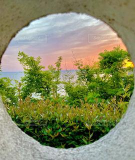 自然,風景,海,花,夕焼け,穴,草木