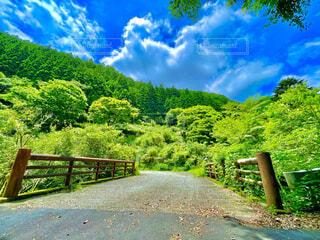 自然,風景,空,公園,夏,橋,屋外,雲,樹木,草木