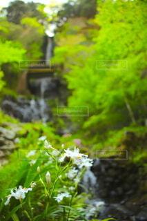 自然,花,滝,樹木,草木