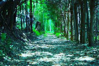 森林,木,屋外,樹木,トンネル,草木