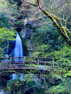 自然,橋,森林,屋外,緑,水面,滝,草,樹木