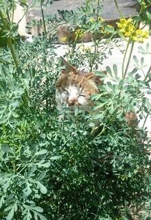 猫,風景,花,動物,庭,屋外,緑,かくれんぼ,トラ,草木,ガーデン