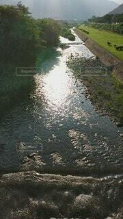 自然,屋外,湖,朝日,川,水面,草,キラキラ