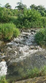 自然,空,屋外,川,水面,水辺,草,樹木,草木,川底,クリーク,ストリーム,水資源,アロヨ,河川地形