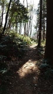 自然,森林,屋外,森,光,樹木,大地,歩道,獣道,草木,進む道