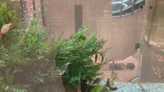 水族館,植木鉢,容器,観葉植物,草木,クリスマス ツリー