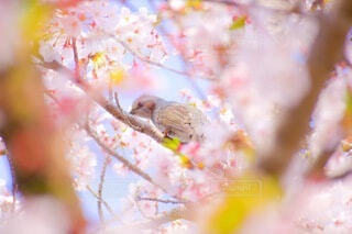 花,桜,動物,鳥