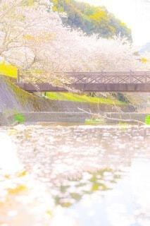 花,桜,川,水面,草木