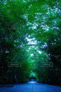 屋外,緑,青,景色,樹木,道,明るい,早朝,森林浴,景観,参道,フレッシュ,ローアングル,出口,木のトンネル