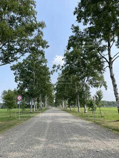 白樺並木の標識の写真・画像素材[4664034]