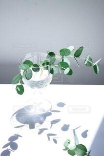 花,屋内,花瓶,植木鉢,壁,食器,デザイン,観葉植物,草木