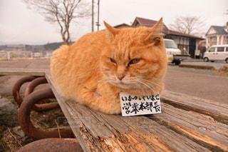 猫 - No.213673