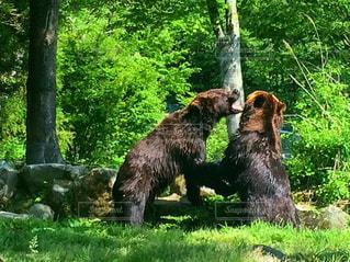 動物,クマ,富士サファリパーク,大迫力,格闘,PassMe