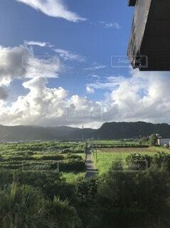風景,空,屋外,南国,雲,沖縄,山,草,樹木,宮古島,草木