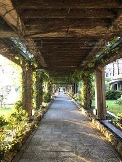 建物,屋外,南国,沖縄,樹木,地面,宮古島,草木