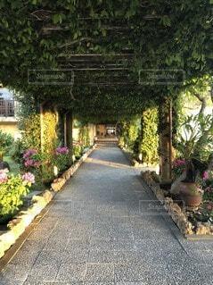 花,屋外,南国,沖縄,樹木,植木鉢,観葉植物,宮古島