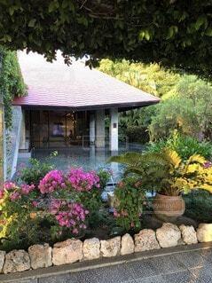 花,屋外,南国,沖縄,家,樹木,植木鉢,観葉植物,宮古島,ガーデン