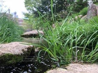 夏の川その2の写真・画像素材[4678720]