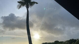 空,屋外,南国,雲,沖縄,樹木,ヤシの木,宮古島,くもり,草木,パーム