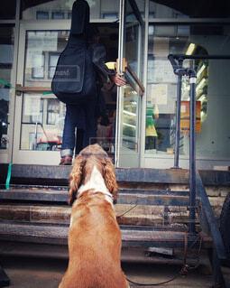 犬,カフェ,ニューヨーク,動物,ギター,愛,ブルックリン,パートナー