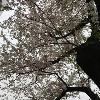 花,屋外,船,樹木,草木,オーク