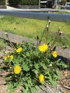花,屋外,黄色,草,草木