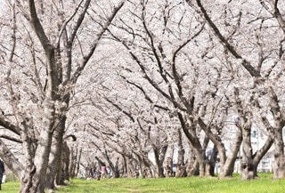 自然,花,春,森林,屋外,景色,草,樹木,草木