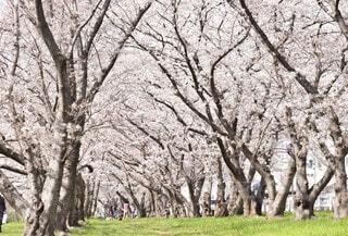 花,春,屋外,景色,草,樹木,草木