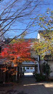 空,秋,紅葉,屋外,窓,家,樹木,日本,和,カエデ
