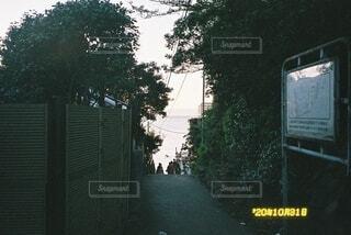 空,屋外,樹木,江ノ島,フィルム,通り,写ルンです,テキスト