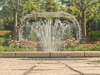 自然,公園,花,屋外,水,樹木,庭園,噴水,草木