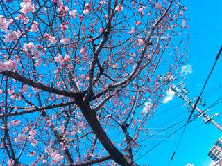 春 - No.401866