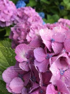植物の上のピンクの花のクローズアップの写真・画像素材[2198266]