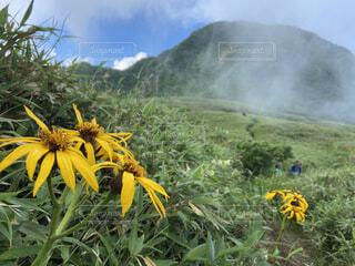 花,屋外,黄色,山,り,草木,夏山登山,百名山雨飾山